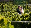 Cape Vineyard Wedding