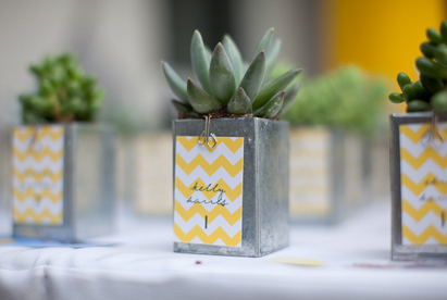 pot plant table numbers